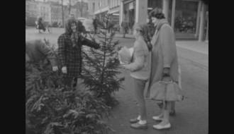 kerstboomkopen